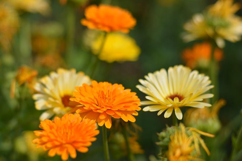 цветочное 23 16.jpg