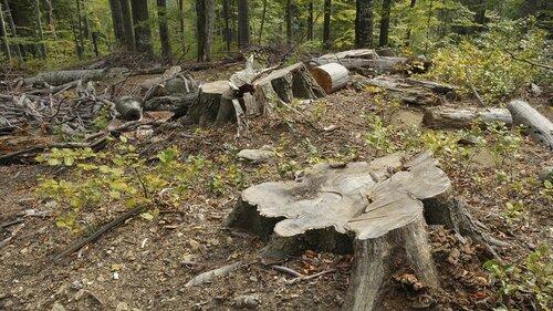 В Молдове могут пятикратно увеличить штрафы за вырубку лесов