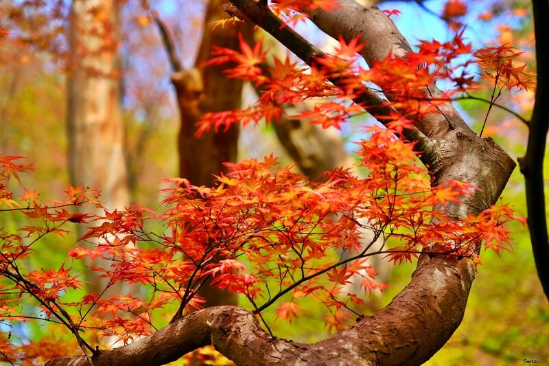 Нагоя ботанический сад Higashiyama