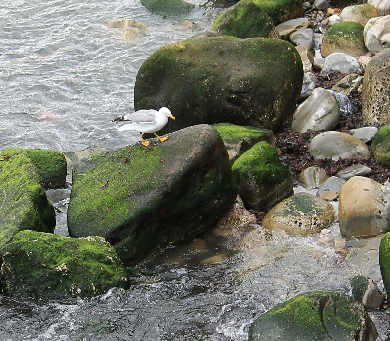 Доностия-Сан-Себастьян. Река Урумеа