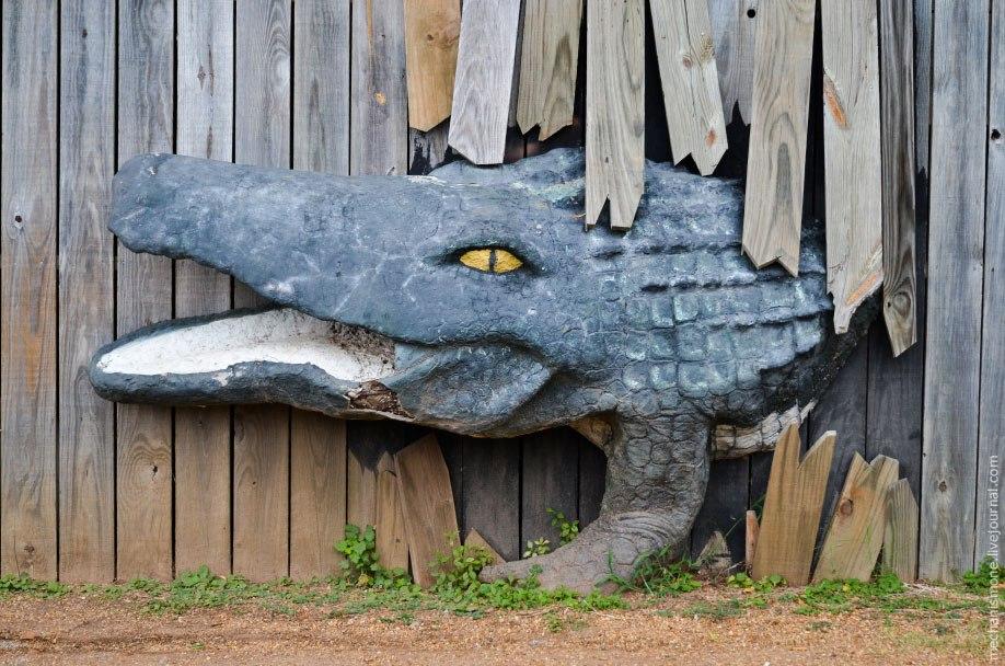 Затем аллигатора вылавливают с фермы. Шкуры используются в основном для обуви, как я уже сказал выше