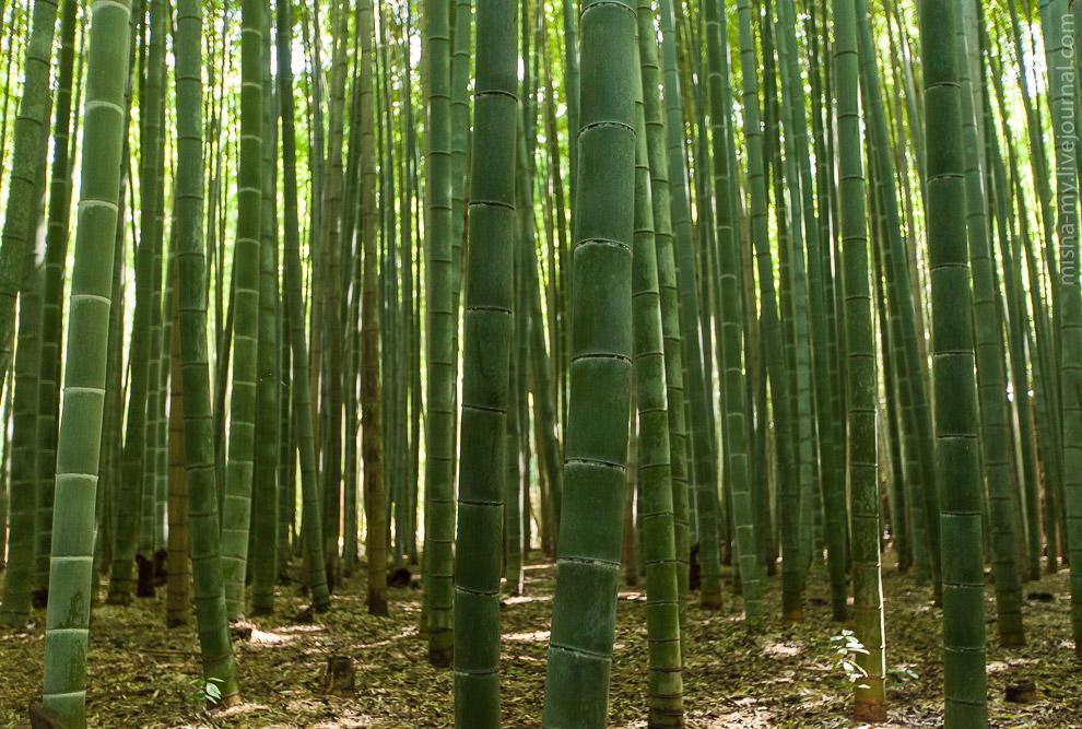 8. Из бамбукового леса мы прошли через парк и вышли на берег реки.
