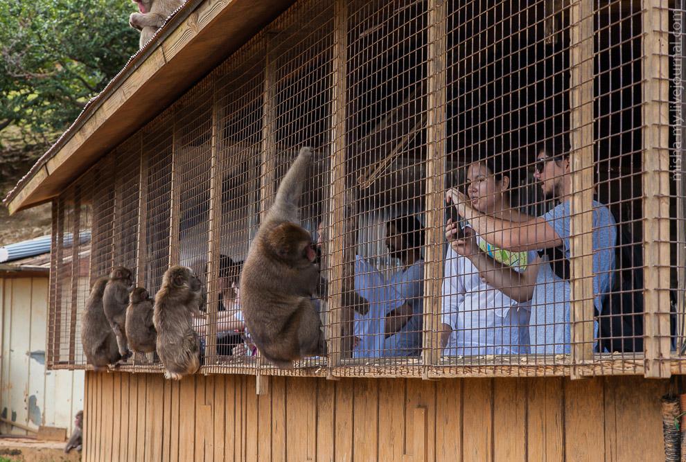 19. Получается такой зоопарк наоборот, где люди сидят в клетке.