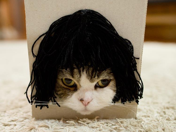 Котизм в коробке (7 фото)