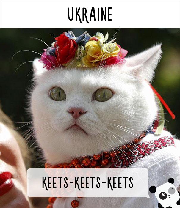 Украина — кыц-кыц-кыц.