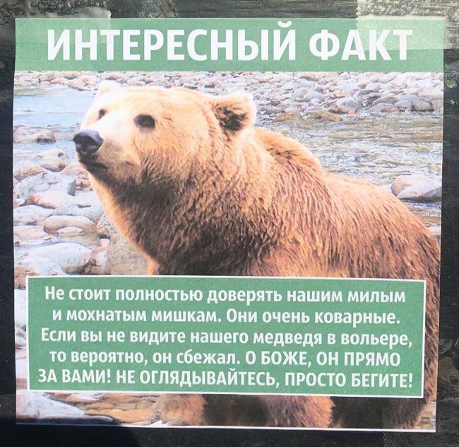 Факты про животных