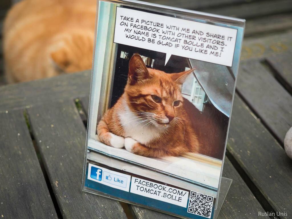 Котик с фейсбуком