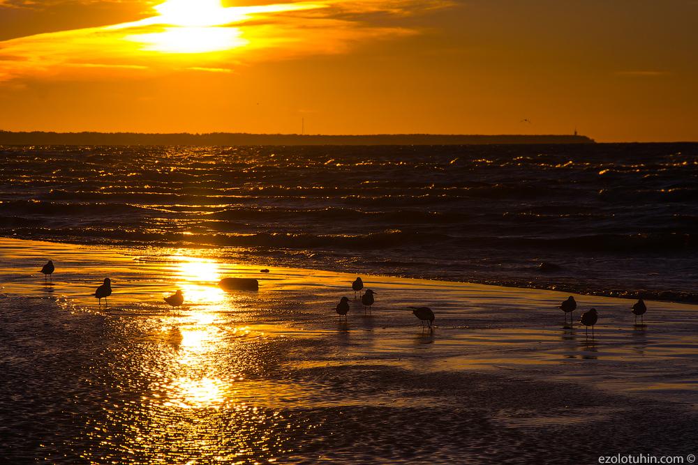 Чайки. Море. Юрмала. Закат