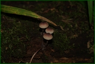 http://img-fotki.yandex.ru/get/153157/15842935.37a/0_eaa38_b0cbef2a_orig.jpg
