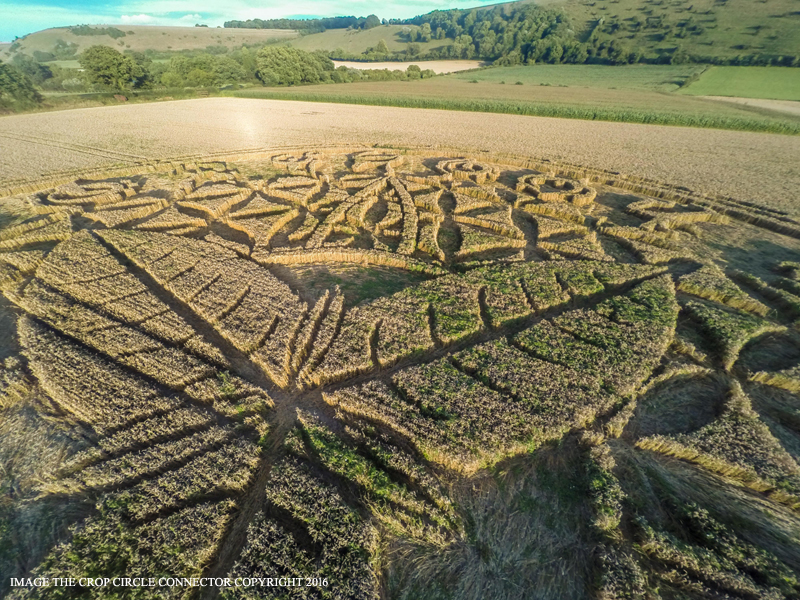 Круг на полях со звёздным посланием недалеко от Солсбери, графство Уилтшир, Великобритания Август 2016