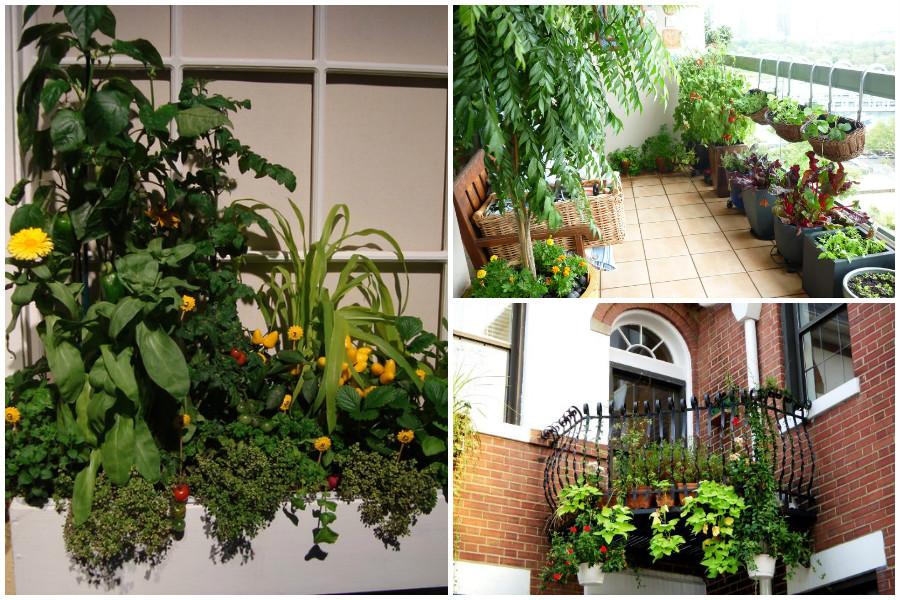 Gardening огород на балконе, идеи в фотографиях.