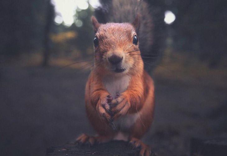 Портреты лесных животных (11 фото)