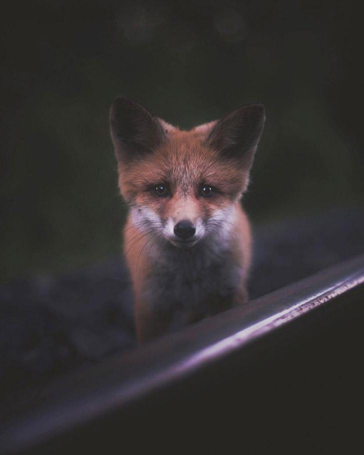 Портреты лесных животных (10 фото)