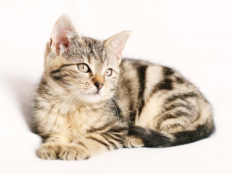 Мурлыканье кошек продлевает жизнь человека— Ученые
