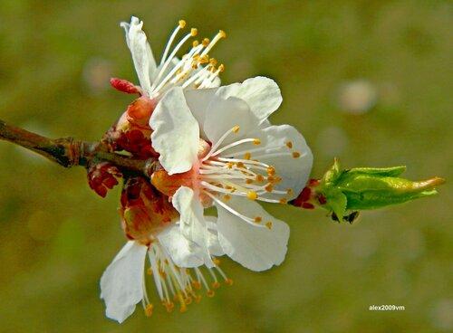 Изящные листья, цветочки прекрасны