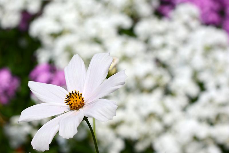 цветочное 16 16.jpg