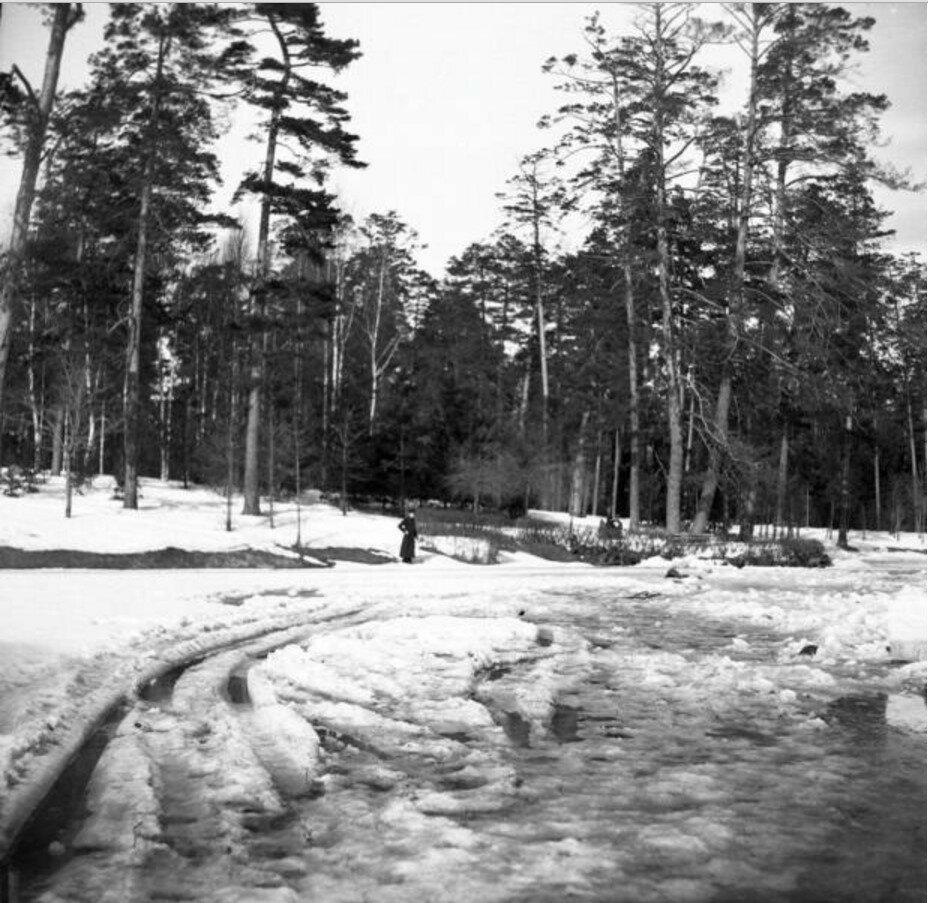1904. Прогулка в Сокольники. «Пруд Олений. Парк. Володя Бер. стоит вдалеке»