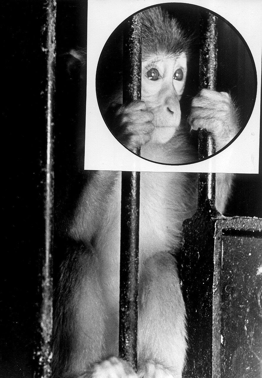 Штеллинген. Зоопарк Гагенбека. Жертва режима