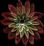 feli_btd_fabric flower1.png