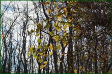 http://img-fotki.yandex.ru/get/15480/15842935.249/0_deb84_3ed2030b_orig.png