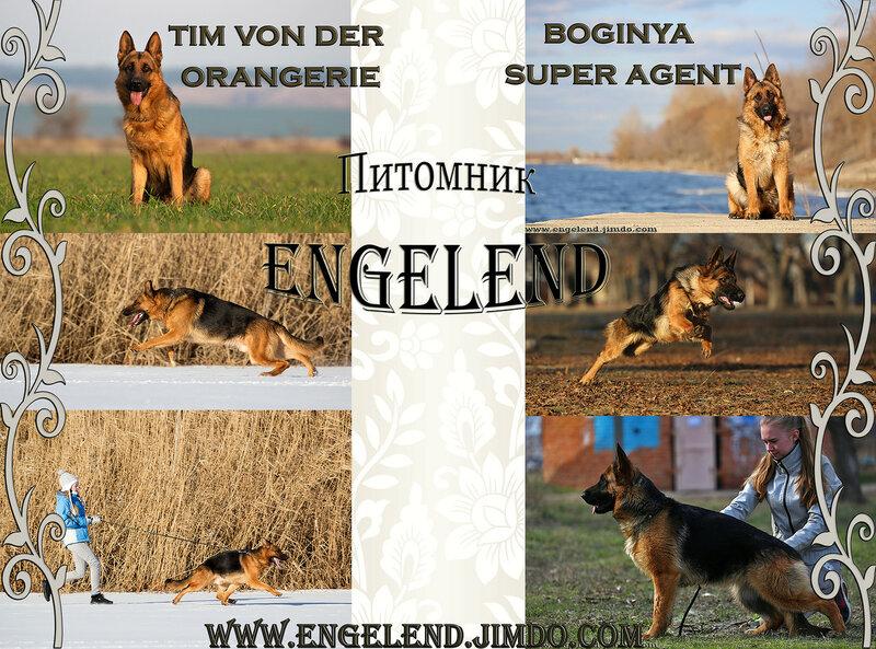 Друзья из Энгельса 0_15b1b6_b2251fc5_XL