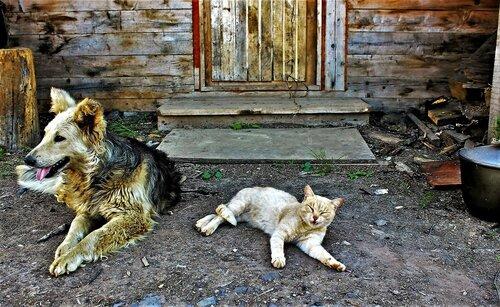 IMG_7921.JPG - Ой, чёй-то зря, Шарик, ты тут лежишь... Сбегал бы лучше на дорогу посмотрел, - не едет ли Дядя Фёдор?