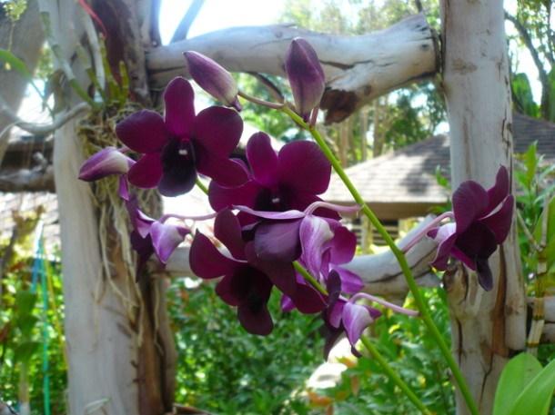 Цветы Таиланда 0 141ade 9c6c30a5 orig