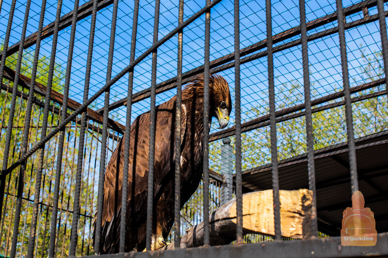 Птицы в зоопарке Лимпопо