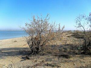 На берегу осеннем ... SAM_4512.JPG