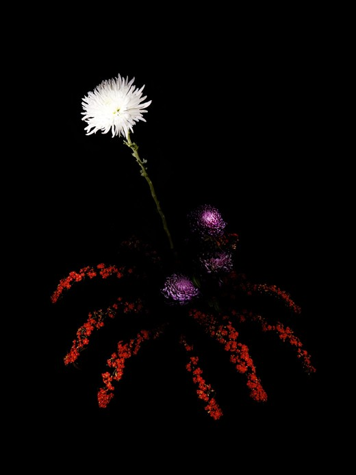 Flowerworks, Sarah Illenberger280.jpg