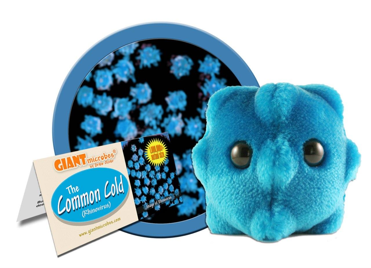 Риновирус