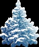 ель  голубая под  снегом.png