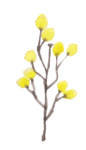 FLOWER_LEMON-01.png