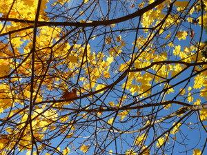 Осень золотая_1. Осенняя природа_1.