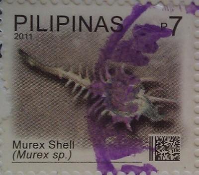 Филиппины 2011 ракушка 7