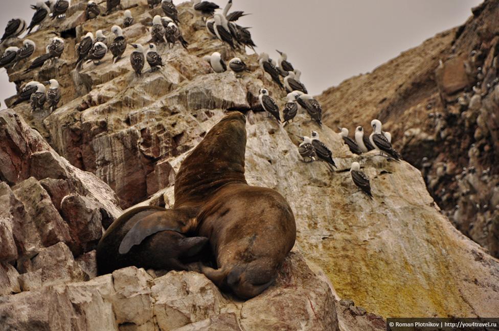 0 161744 2ace8a42 orig Национальный парк Паракас и острова Бальестас в Перу