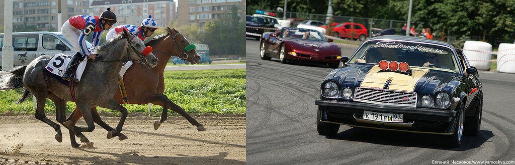 Лошади.23..jpg