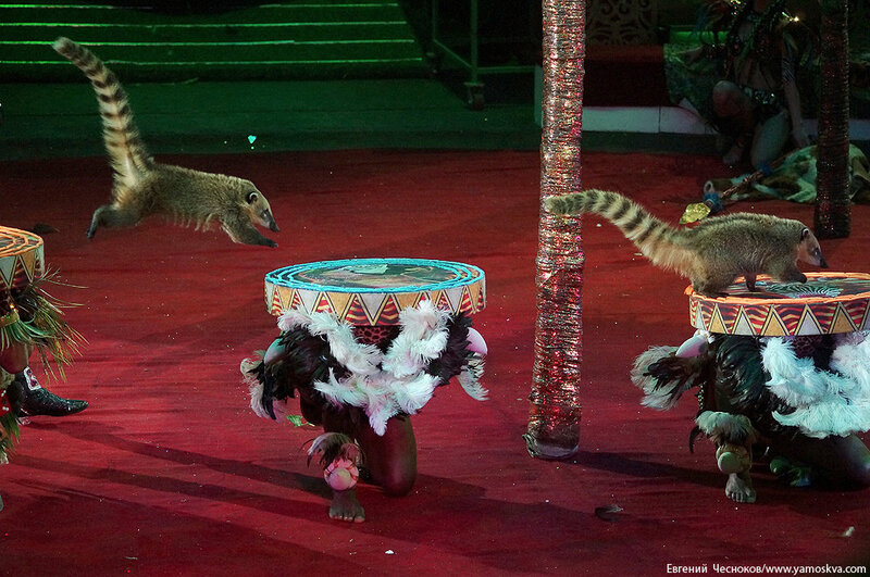 Зима. Королевский цирк. 20.02.15.29.Африка..jpg