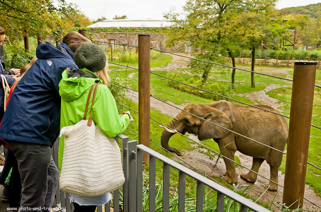 """6. Африканские слоны в зоопарке """"Opel Zoo"""" вторыми в мире принесли потомство. Отчеты туристов об аренде машины и поездках по Германии самостоятельно. Достопримечательности недалеко от Франкфурта."""