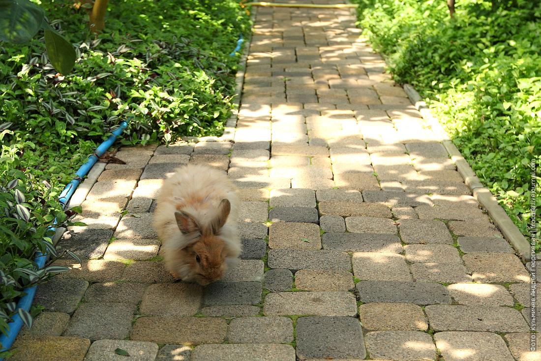 кролики в саратовском лимонарии