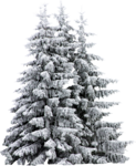 sd_woodland-winter-trees.png