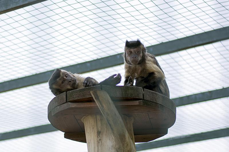обезьянки странные люди
