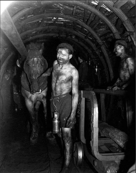 1945. Лошадь в шахте