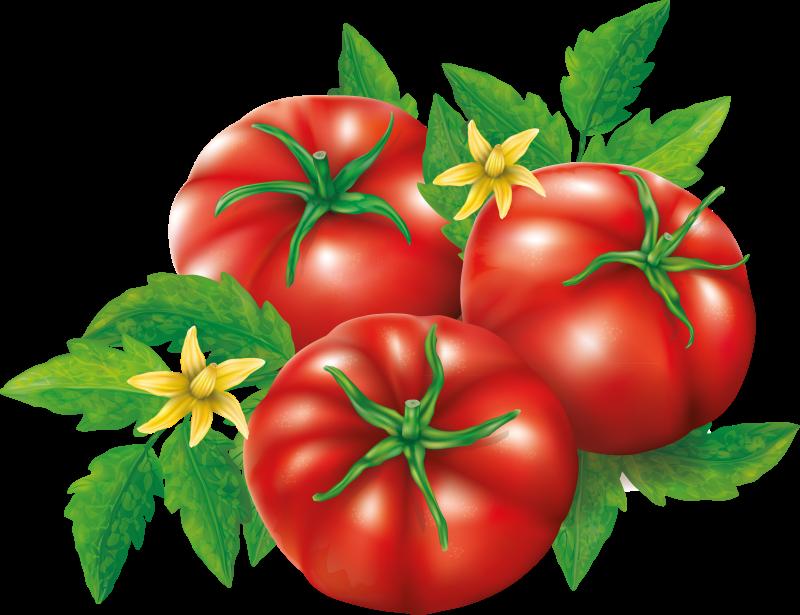 овощи (9).png