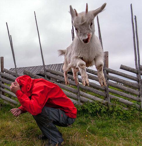 коза.jpg
