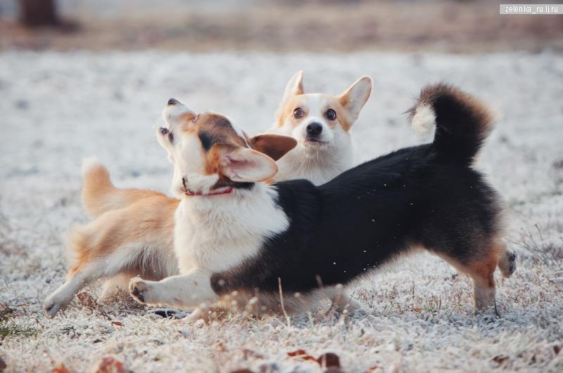 пофотографирую Ваших собак! - Страница 5 0_16986f_5e650166_orig