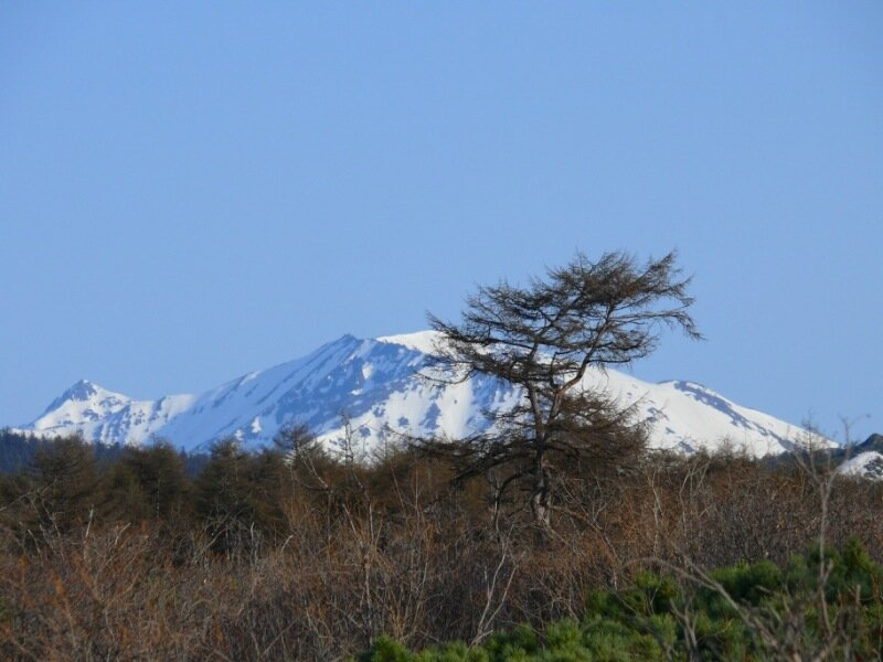 лиственница и гора.JPG