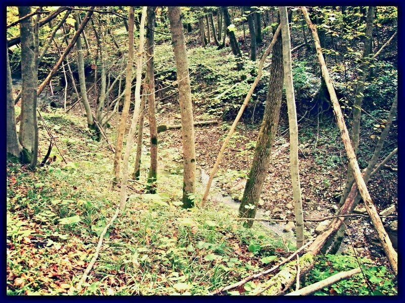11 октября 2008, под Горячим Ключом, лес (45).JPG