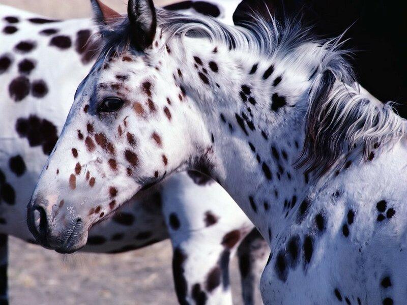 Тигровая лошадка