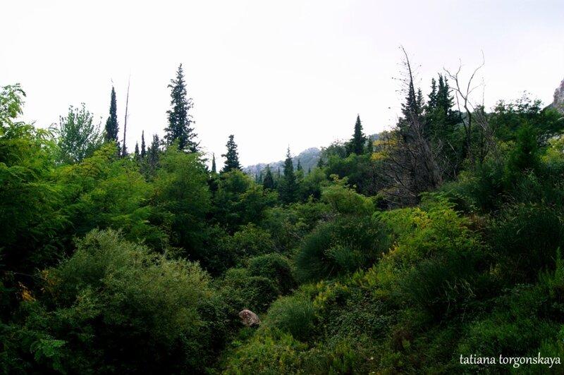 Лес в Котобиле